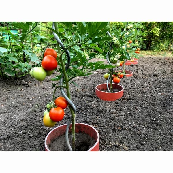 Špirálová tyč opora k paradajkám