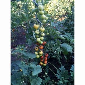 Špirálová tyč opora k rajčinám